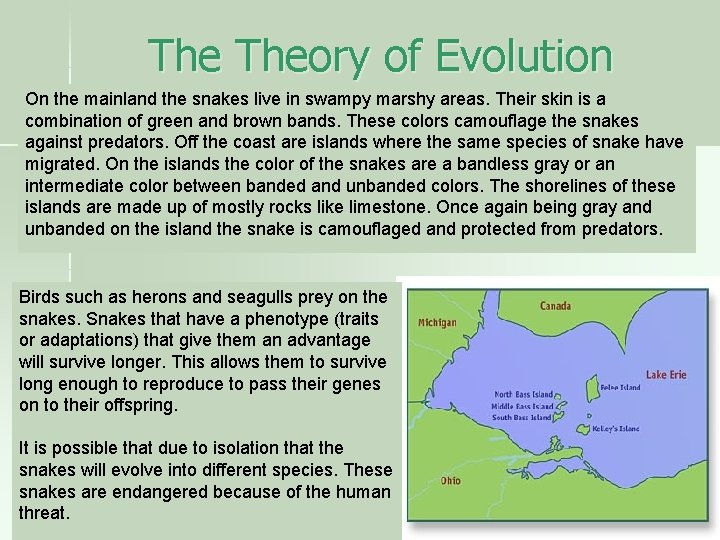 The Theory of Evolution On the mainland the snakes live in swampy marshy areas.