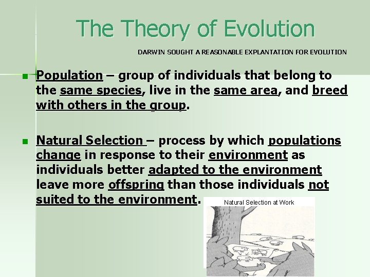 The Theory of Evolution DARWIN SOUGHT A REASONABLE EXPLANTATION FOR EVOLUTION n Population –