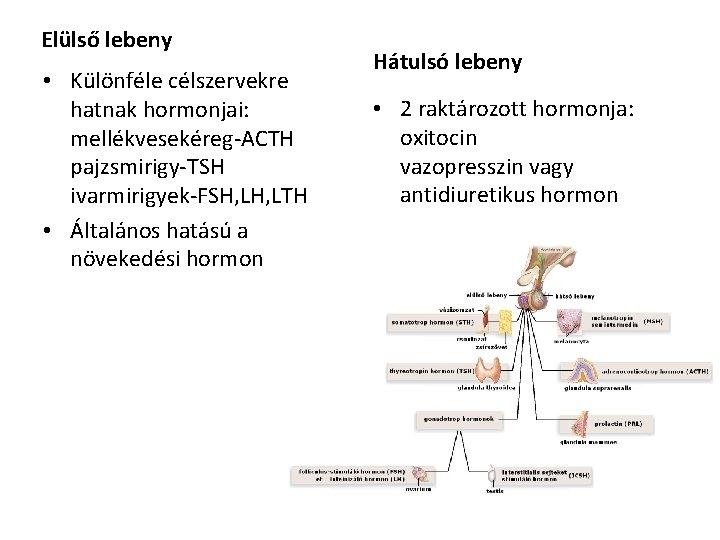 antidiuretikus hormon hiánya Mit tud enni és inni a prosztatitis
