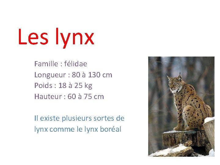 Les lynx Famille : félidae Longueur : 80 à 130 cm Poids : 18