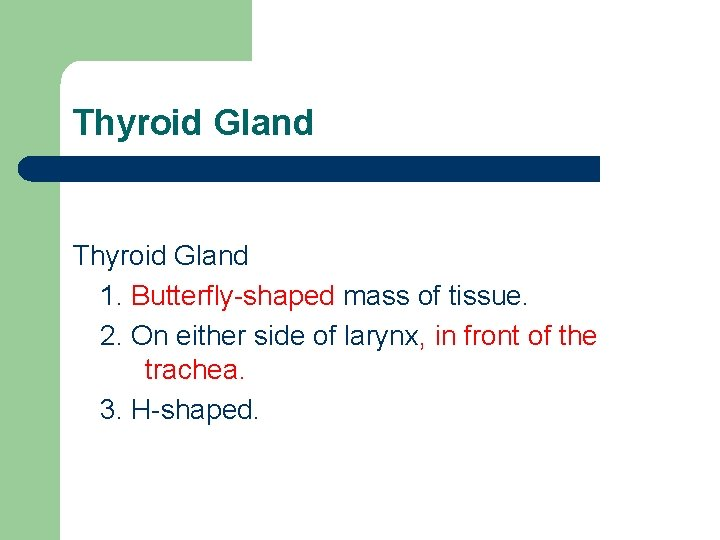 Thyroid Gland 1. Butterfly-shaped mass of tissue. 2. On either side of larynx, in