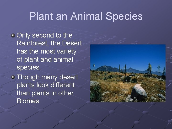 Plant an Animal Species Only second to the Rainforest, the Desert has the most