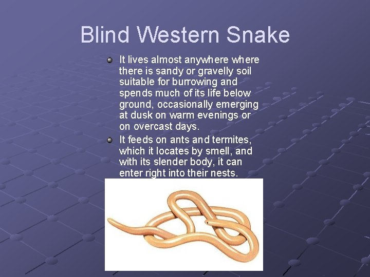 Blind Western Snake It lives almost anywhere there is sandy or gravelly soil suitable