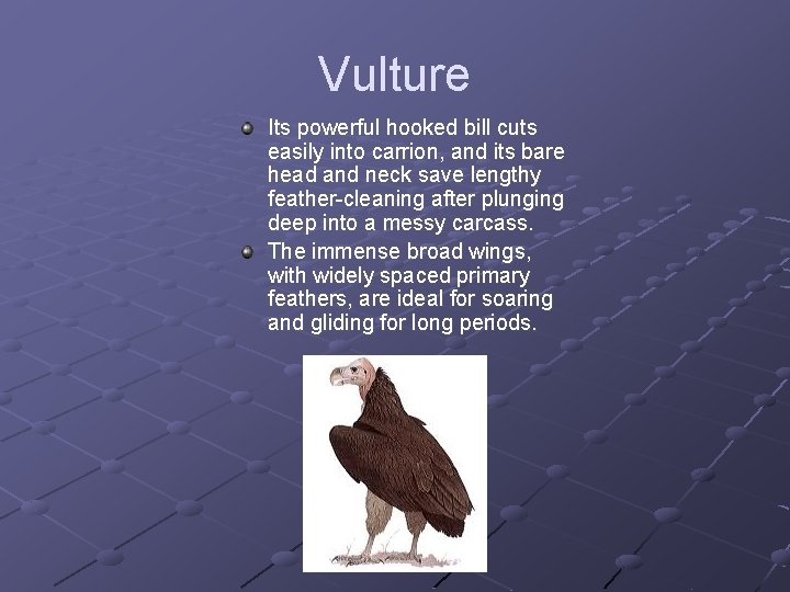 Vulture Its powerful hooked bill cuts easily into carrion, and its bare head and