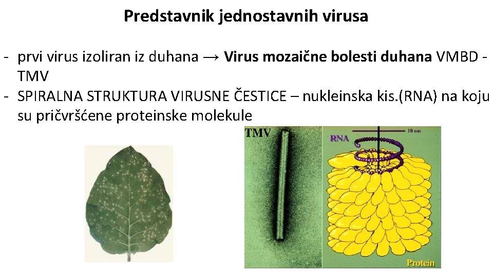 Biologija 1 virusi, Helminth therapy ibs - acoperisuri-sigure.ro, Helminthic therapy ibs