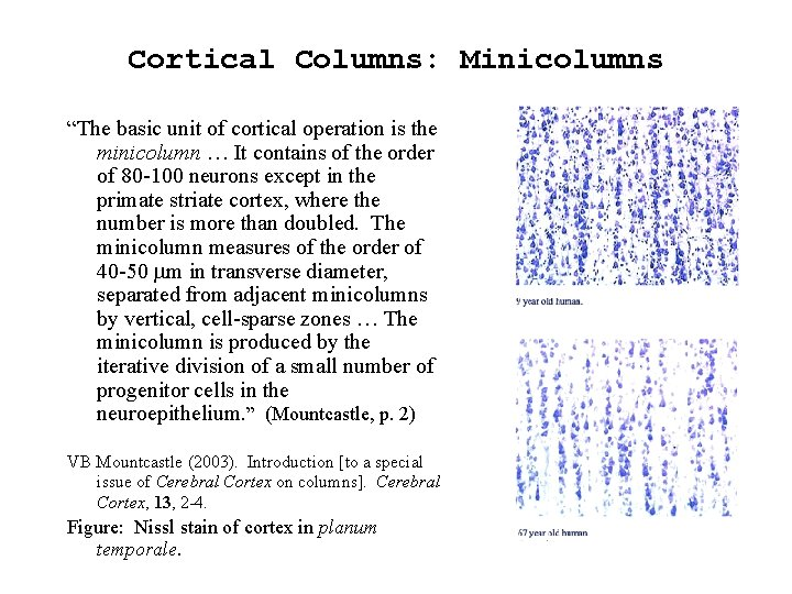 """Cortical Columns: Minicolumns """"The basic unit of cortical operation is the minicolumn … It"""