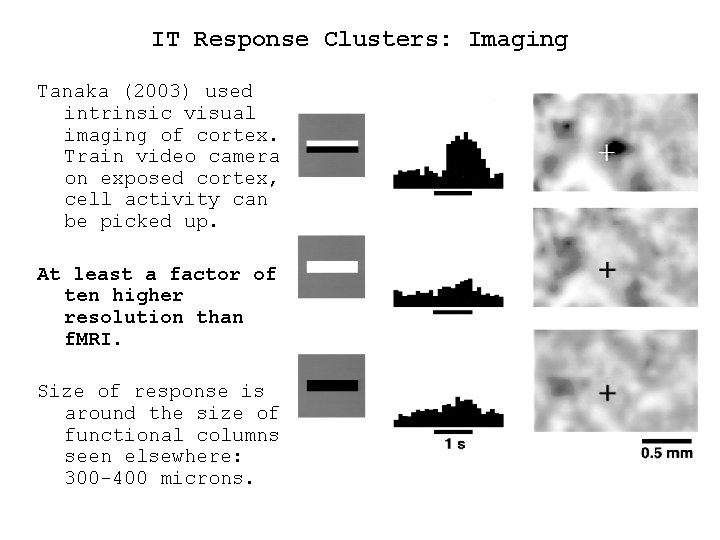 IT Response Clusters: Imaging Tanaka (2003) used intrinsic visual imaging of cortex. Train video