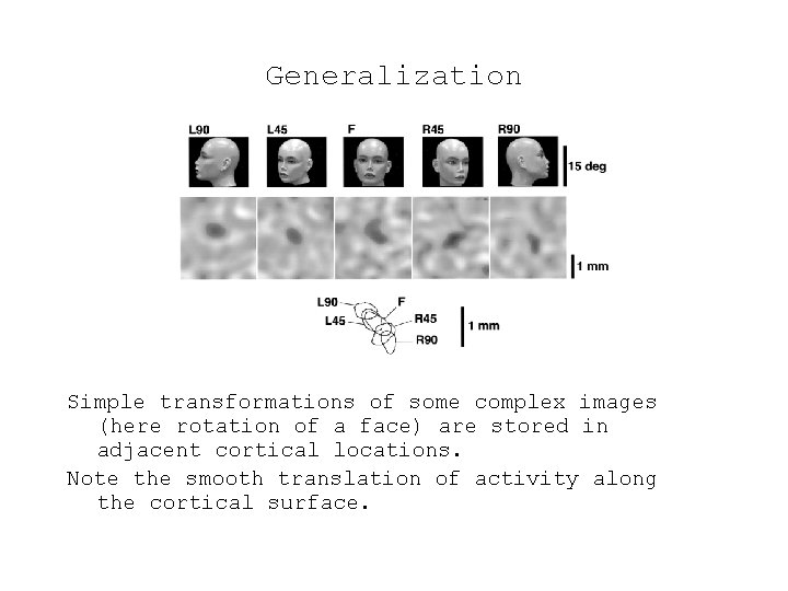 Generalization Simple transformations of some complex images (here rotation of a face) are stored