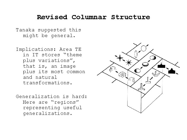 Revised Columnar Structure Tanaka suggested this might be general. Implications: Area TE in IT