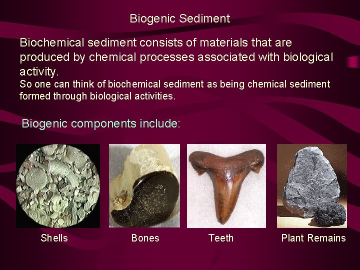 Biogenic Sediment Biochemical sediment consists of materials that are produced by chemical processes associated