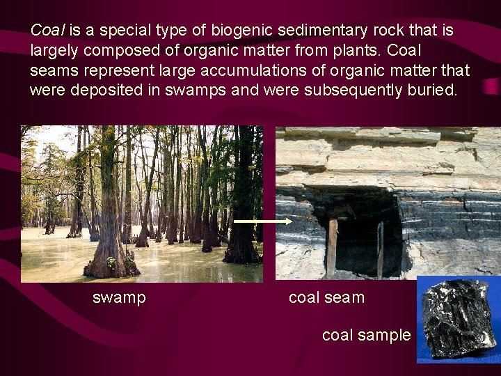 Coal is a special type of biogenic sedimentary rock that is largely composed of