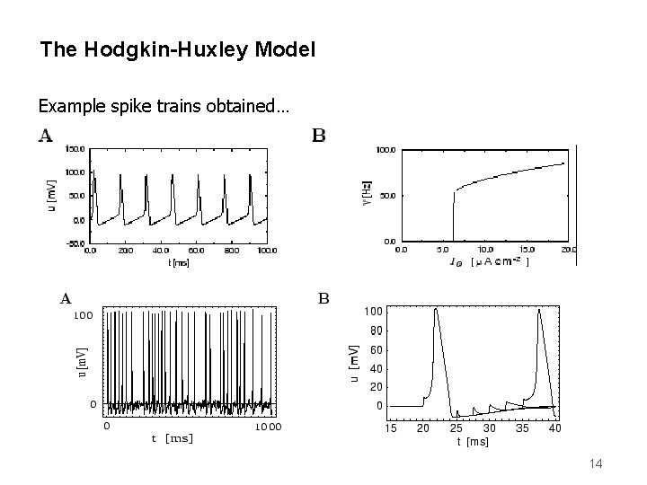 The Hodgkin-Huxley Model Example spike trains obtained… 14