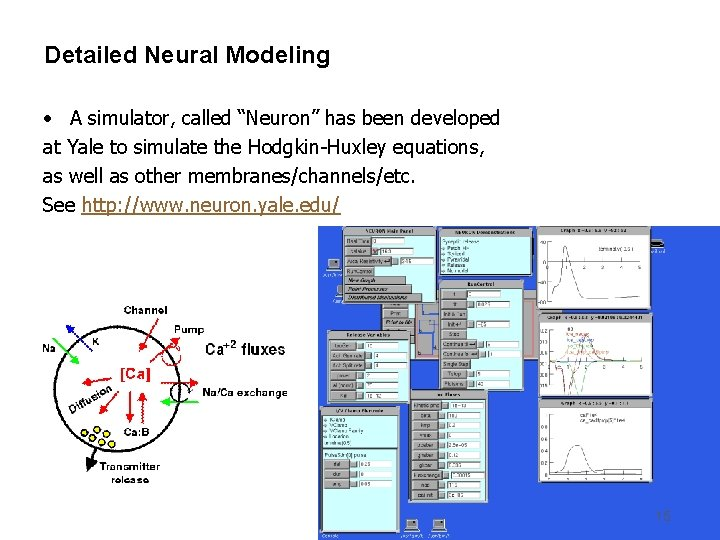 """Detailed Neural Modeling • A simulator, called """"Neuron"""" has been developed at Yale to"""