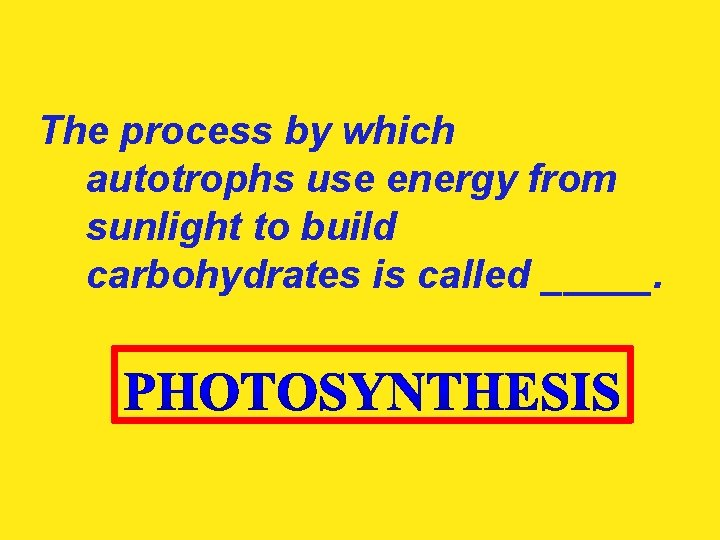 The process by which autotrophs use energy from sunlight to build carbohydrates is called