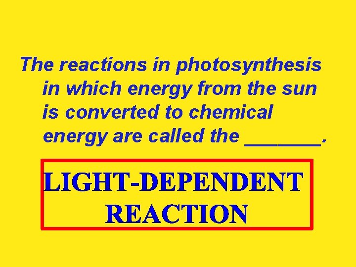 The reactions in photosynthesis in which energy from the sun is converted to chemical