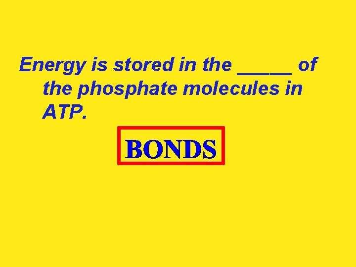 Energy is stored in the _____ of the phosphate molecules in ATP.