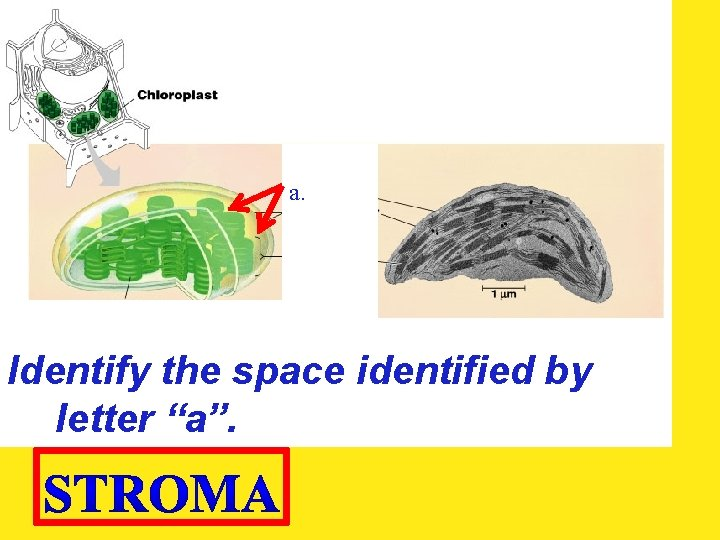 """a. Identify the space identified by letter """"a""""."""