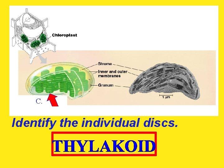 C. Identify the individual discs.