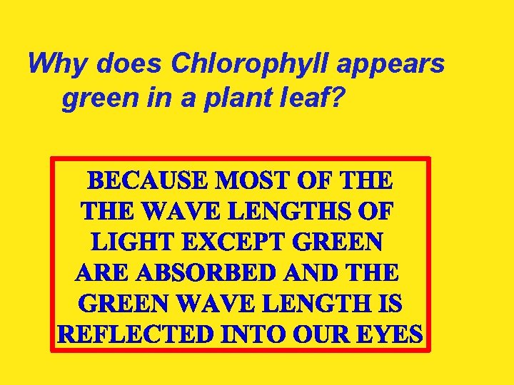 Why does Chlorophyll appears green in a plant leaf?