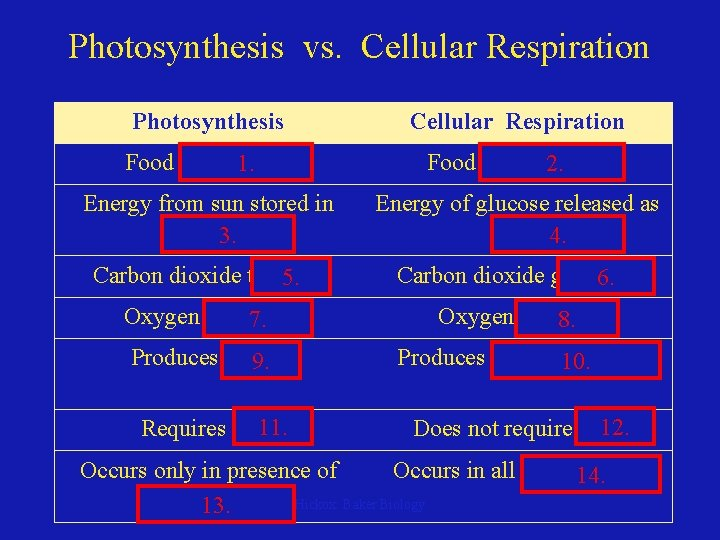Photosynthesis vs. Cellular Respiration Photosynthesis Cellular Respiration Food synthesized 1. Food broken 2. down