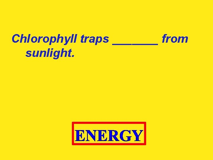 Chlorophyll traps _______ from sunlight.