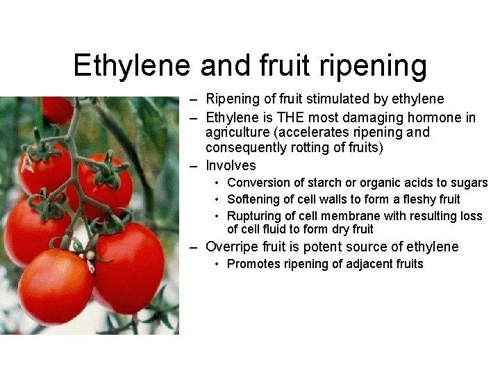 Ethylene and fruit ripening – Ripening of fruit stimulated by ethylene – Ethylene is