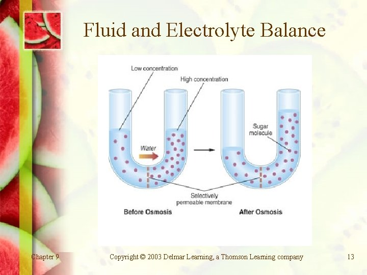 Fluid and Electrolyte Balance Chapter 9 Copyright © 2003 Delmar Learning, a Thomson Learning