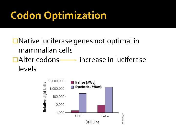 Codon Optimization �Native luciferase genes not optimal in mammalian cells �Alter codons increase in