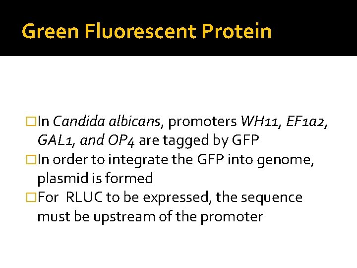 Green Fluorescent Protein �In Candida albicans, promoters WH 11, EF 1 a 2, GAL