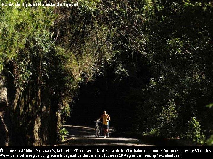 Forêt de Tijuca (Floresta da Tijuca) Étendue sur 32 kilomètres carrés, la forêt de