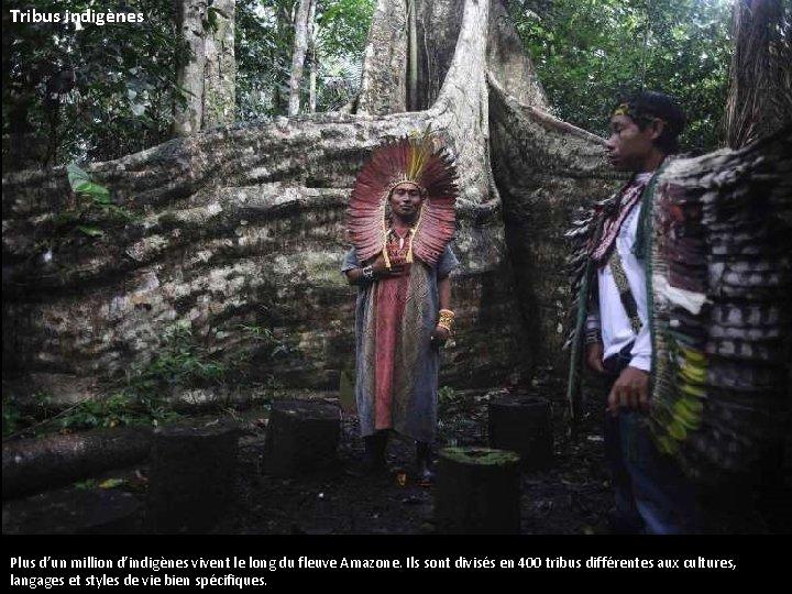 Tribus indigènes Plus d'un million d'indigènes vivent le long du fleuve Amazone. Ils sont