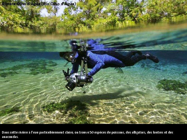 Rivière Olho d'Água (Rio Olho d'Água) Dans cette rivière à l'eau particulièrement claire, on