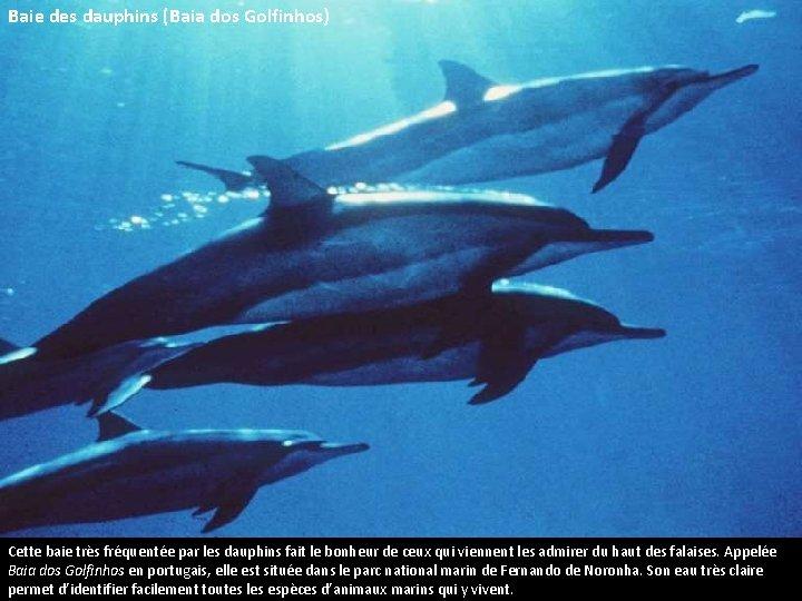 Baie des dauphins (Baia dos Golfinhos) Cette baie très fréquentée par les dauphins fait