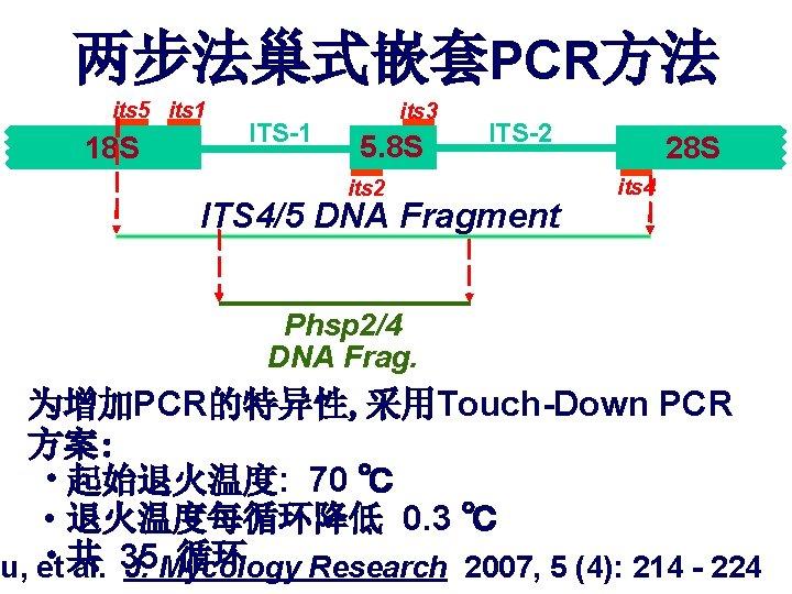两步法巢式嵌套PCR方法 its 5 its 1 18 S ITS-1 its 3 5. 8 S its