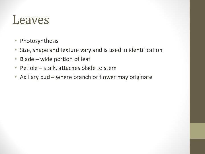 Leaves • • • Photosynthesis Size, shape and texture vary and is used in