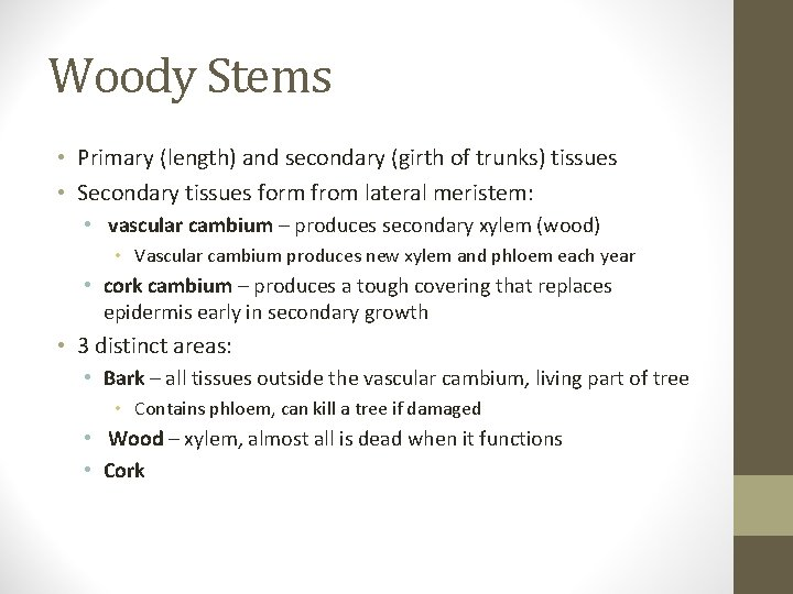 Woody Stems • Primary (length) and secondary (girth of trunks) tissues • Secondary tissues