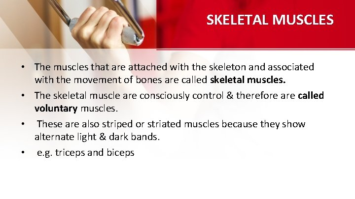 SKELETAL MUSCLES • The muscles that are attached with the skeleton and associated with