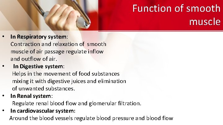 Function of smooth muscle • In Respiratory system: Contraction and relaxation of smooth muscle