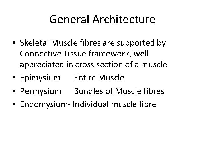 General Architecture • Skeletal Muscle fibres are supported by Connective Tissue framework, well appreciated