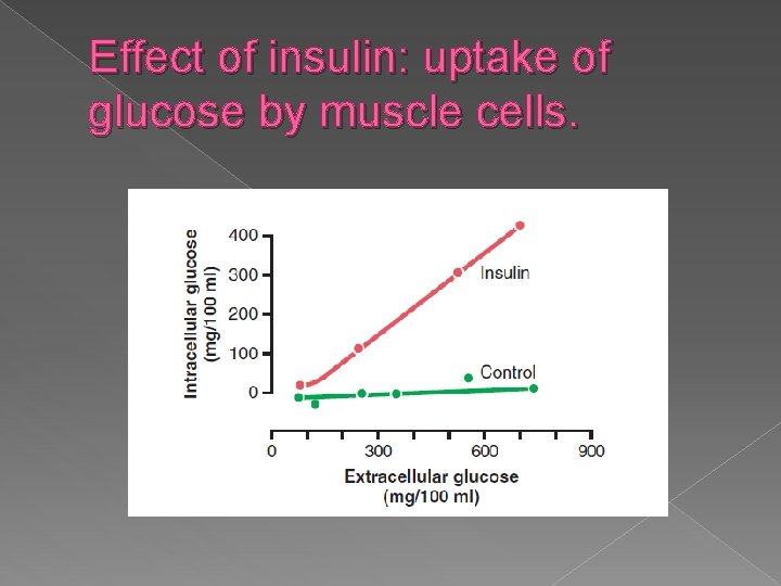 Effect of insulin: uptake of glucose by muscle cells.