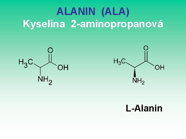 ALANIN (ALA) Kyselina 2 -aminopropanová L-Alanin