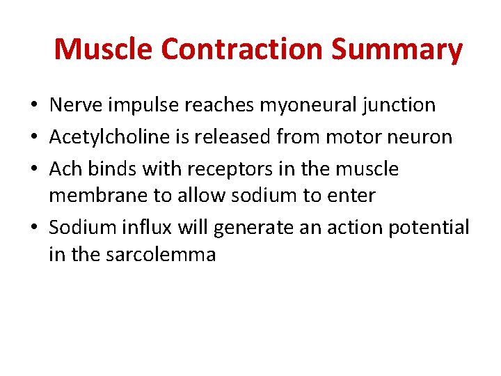 Muscle Contraction Summary • Nerve impulse reaches myoneural junction • Acetylcholine is released from