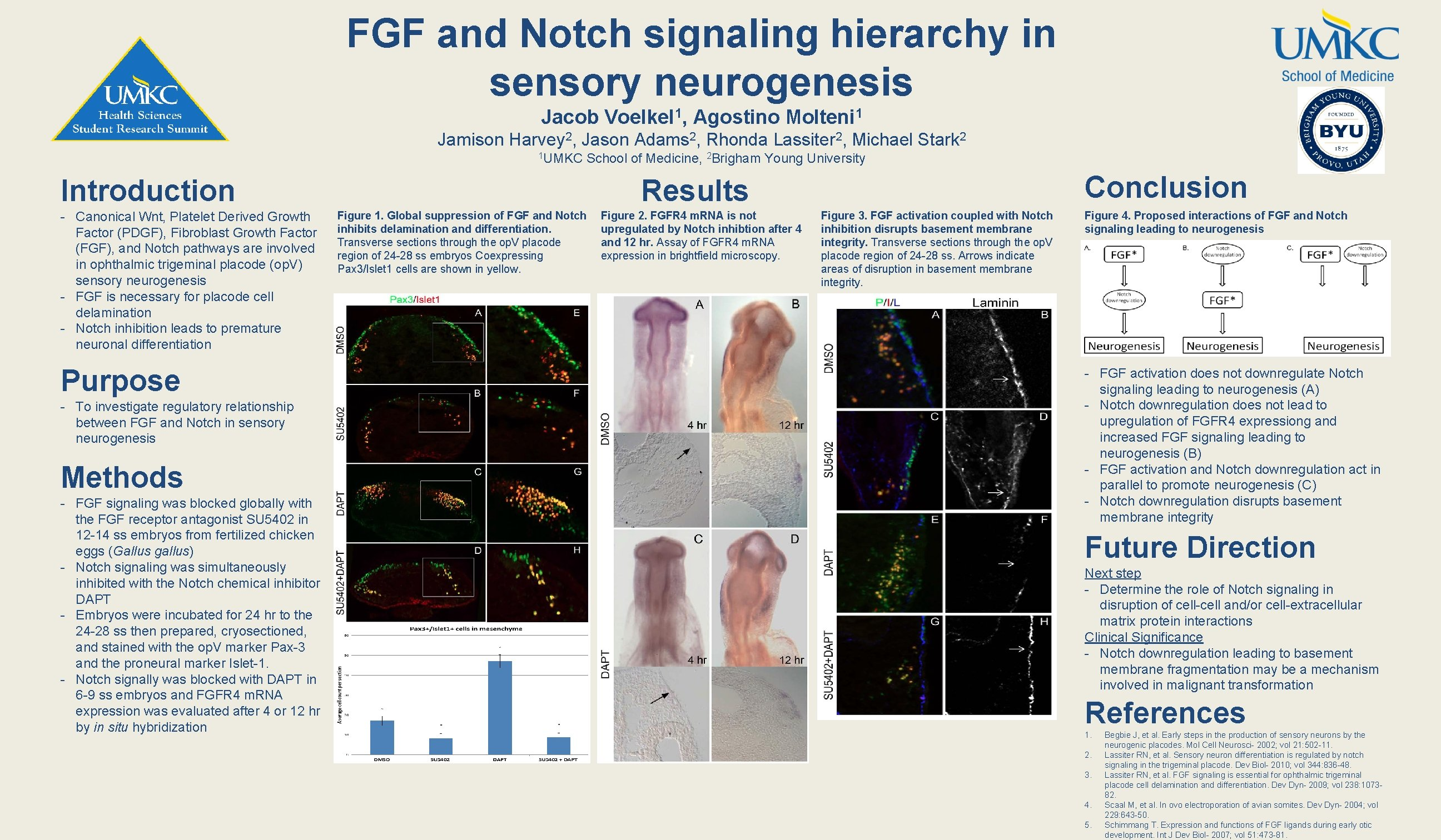FGF and Notch signaling hierarchy in sensory neurogenesis Jacob Voelkel 1, Agostino Molteni 1