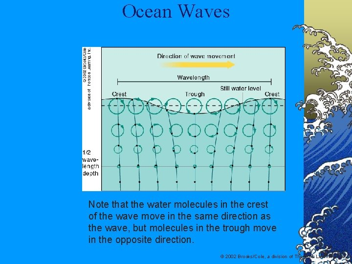 Ocean Waves Note that the water molecules in the crest of the wave move