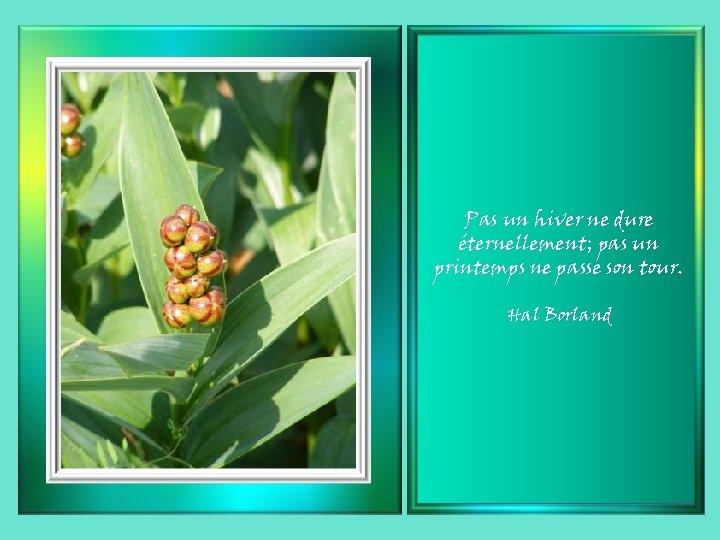 Pas un hiver ne dure éternellement; pas un printemps ne passe son tour. Hal