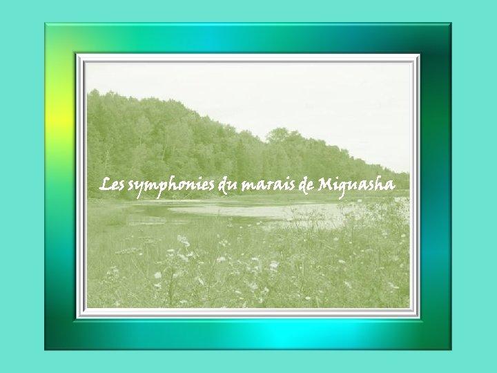 Les symphonies du marais de Miguasha