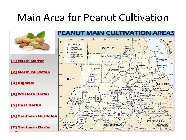 Main Area for Peanut Cultivation