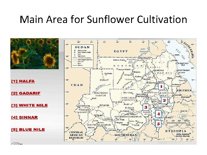 Main Area for Sunflower Cultivation