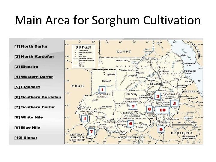 Main Area for Sorghum Cultivation