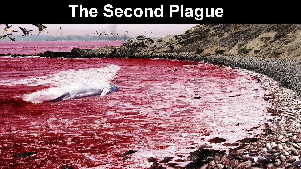 The Second Plague
